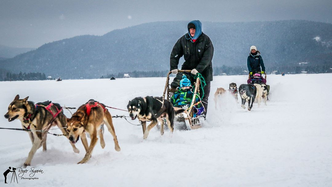 Man doing dog sledding at Féérie d'hiver de Saint-Donat