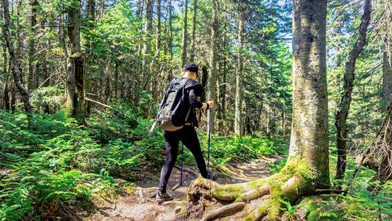 Le sentier de la Montagne Noire à Saint-Donat