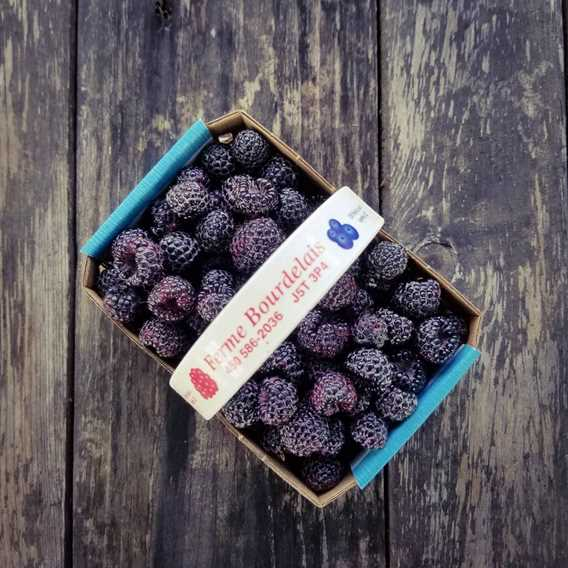 Ferme Bourdelais basket of blueberries