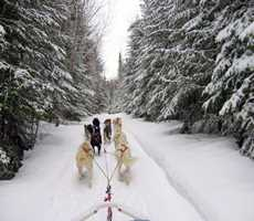 evasion-nature-dogsledding