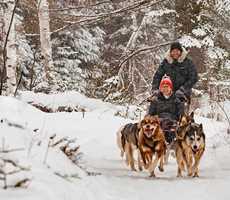 Traîneaux à chiens à l'Auberge du Lac Taureau