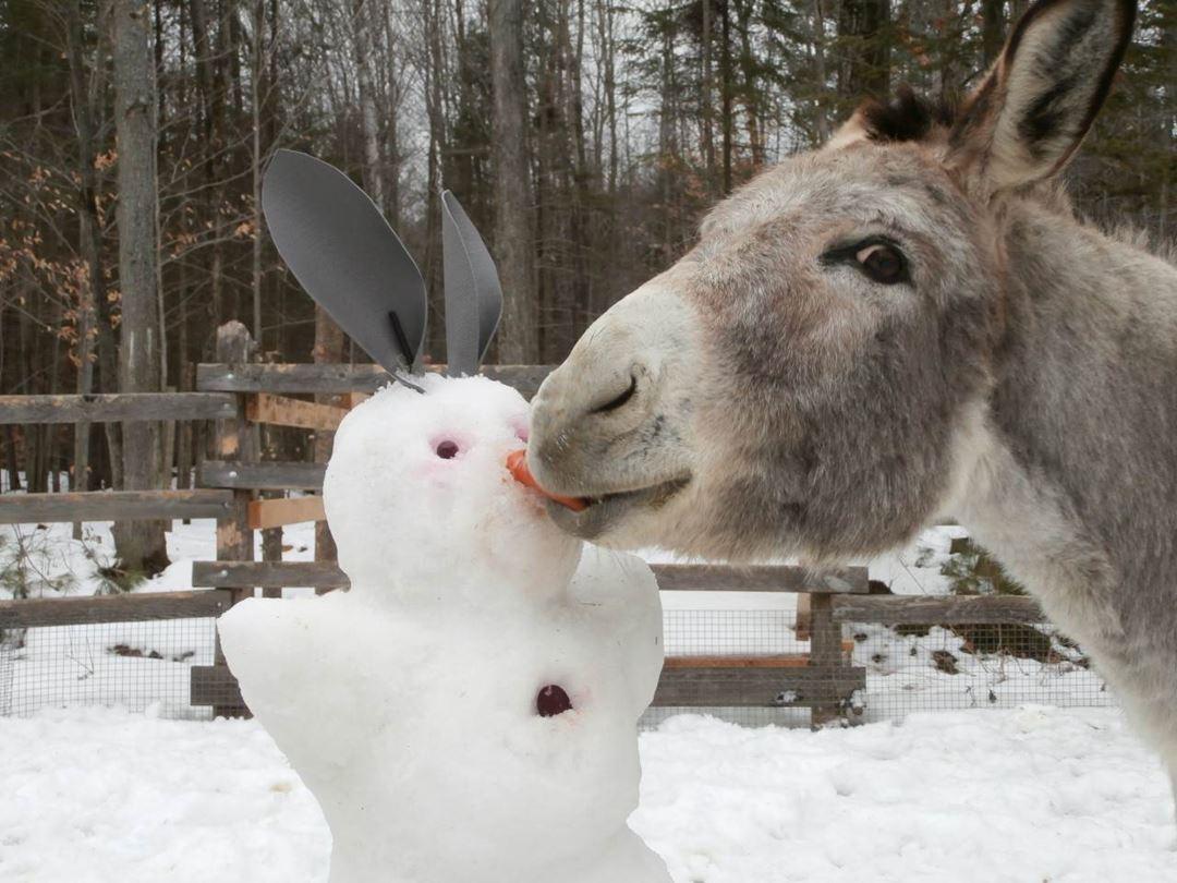 Vénus adore les bonhommes de neige!