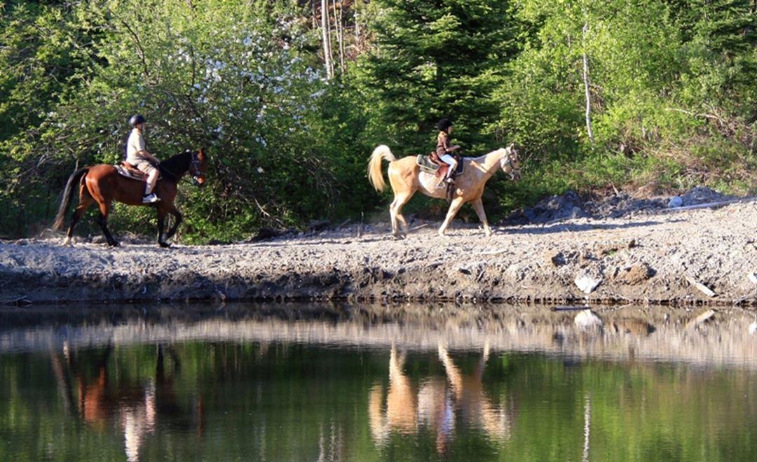 Domaine-Sam-Calm-equitation