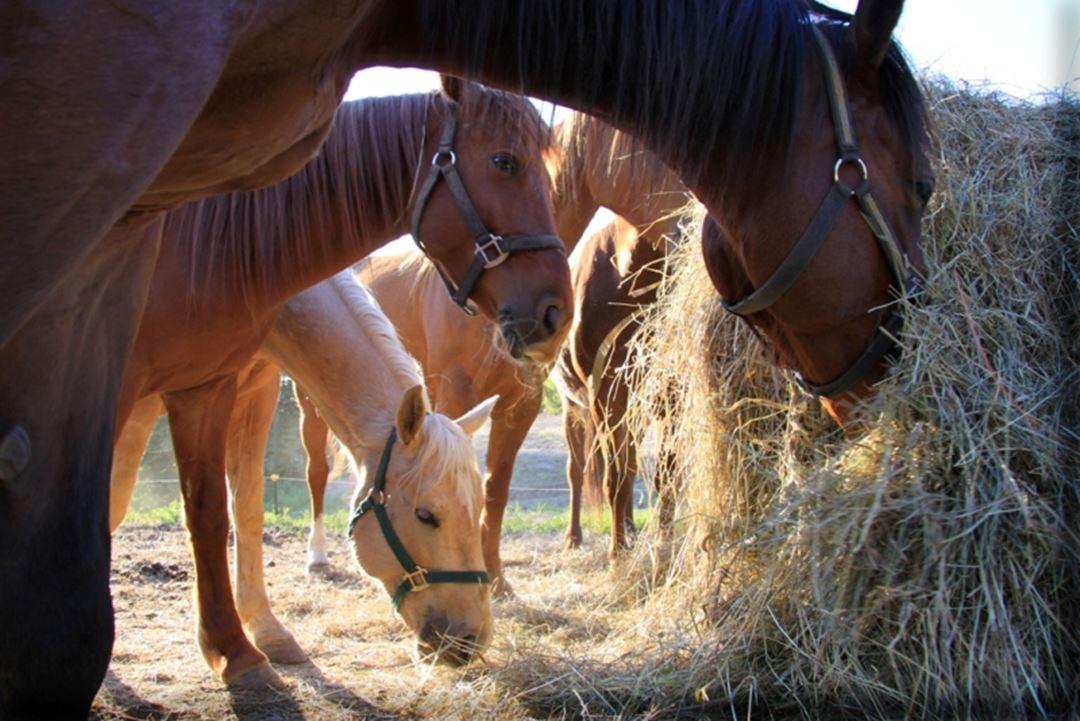 Domaine-Sam-Calm-chevaux