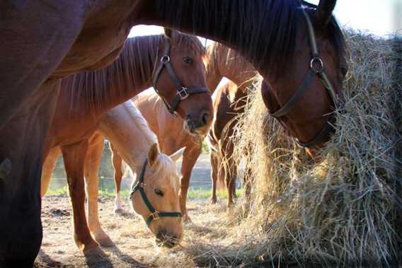 Domaine-Sam-Calm-horses