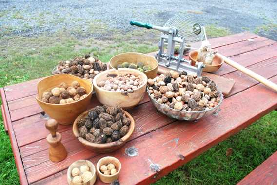 Au jardin des noix