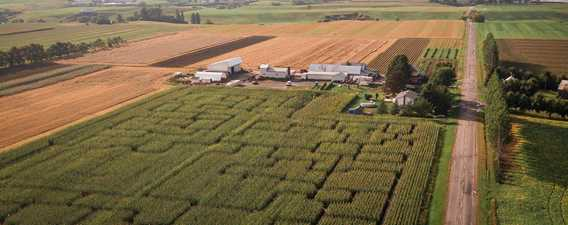 The big corn maze at Ferme Guy Rivest