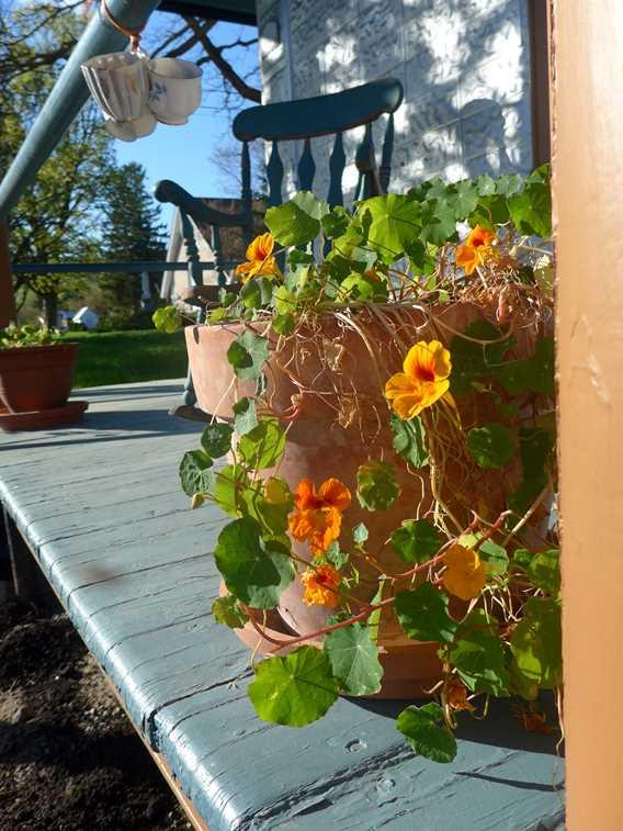 Pot de fleur sur la terrasse du Gîte Chêne et Capucine