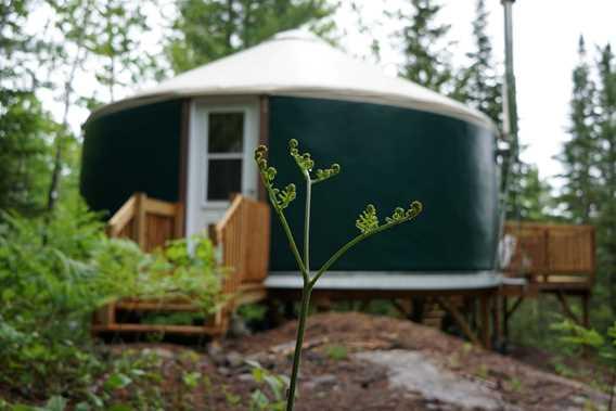 Sow Yurt in summer