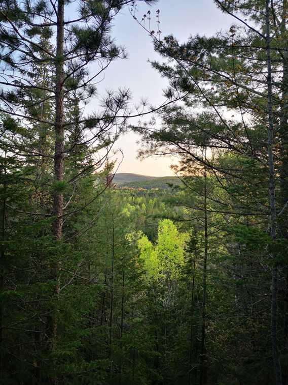 Vue de la forêt de chez Sow