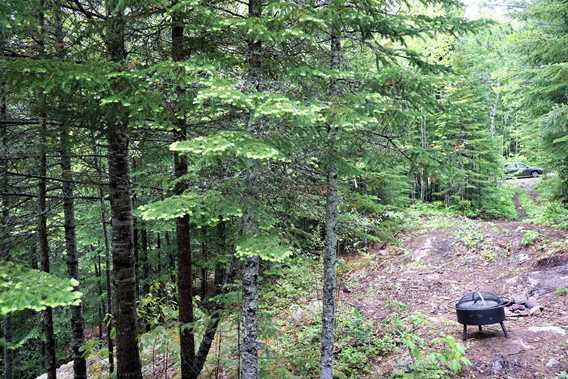 Trail in the forest at Sow