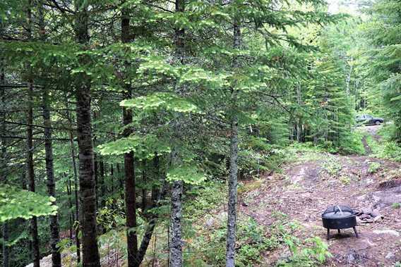 Chemin dans le bois chez Sow