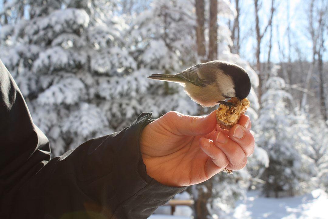 Bird in winter Parc régional de la forêt Ouareau
