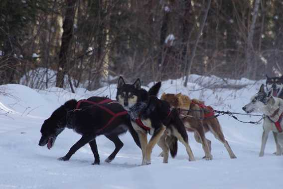evasion-nature-expedition-k9-dogsledding
