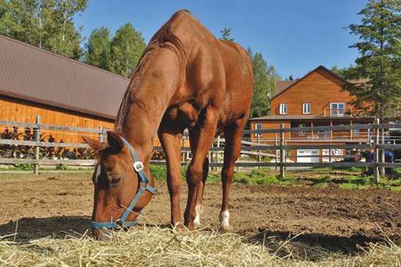 Horse riding at Domaine Sam-Calm