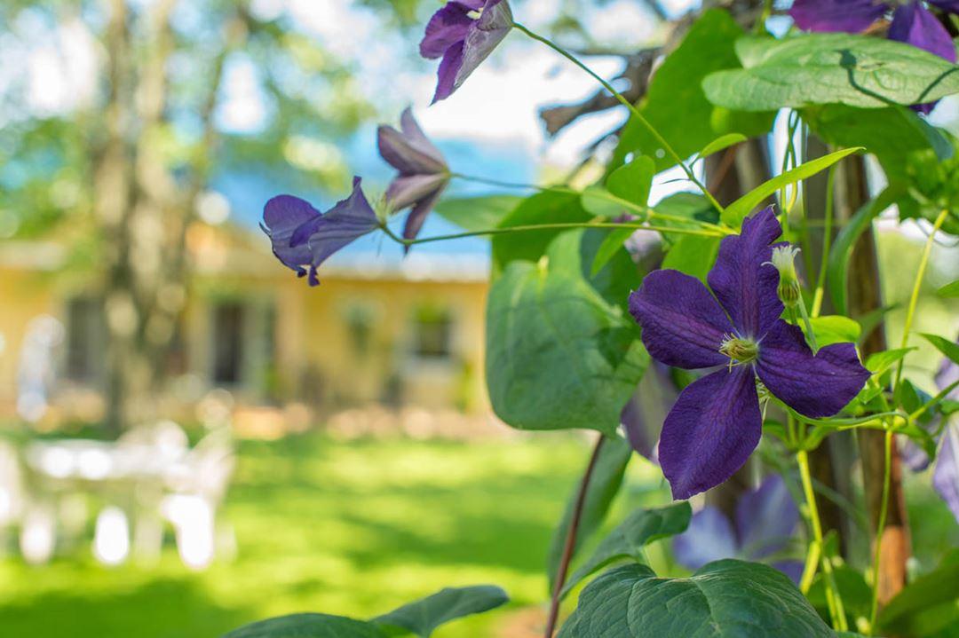 Jardin Moore