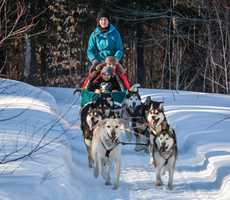 Dogsledding at Kinadapt