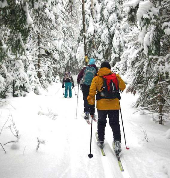 Groupe qui fait du ski de fond dans la forêt dans le sentier de Saint-Donat