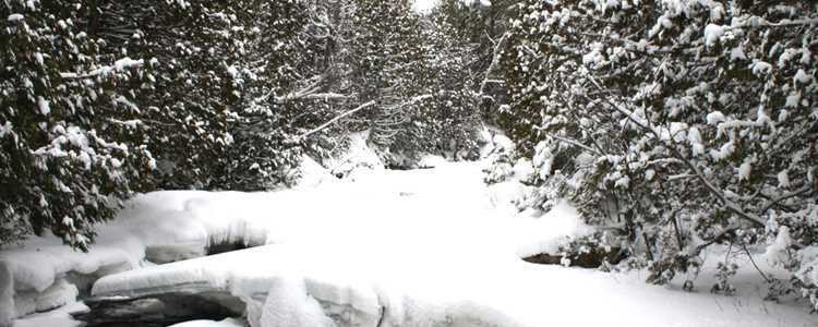 Snowshoeing on the trail Swaggin