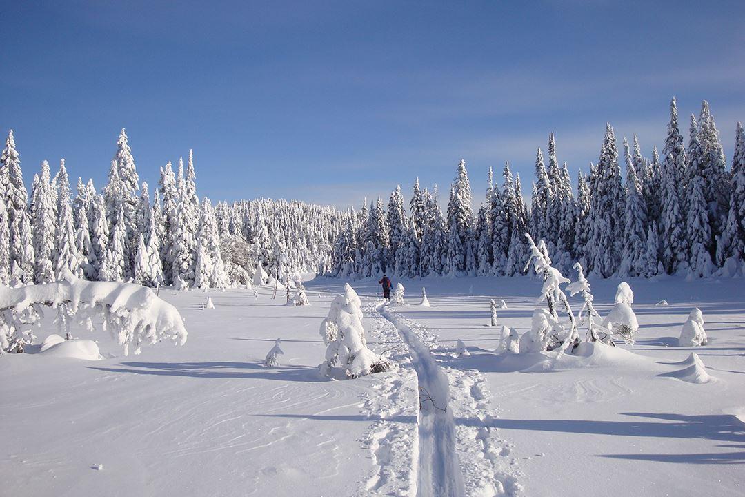 Faire du ski de fond à Saint-Donat