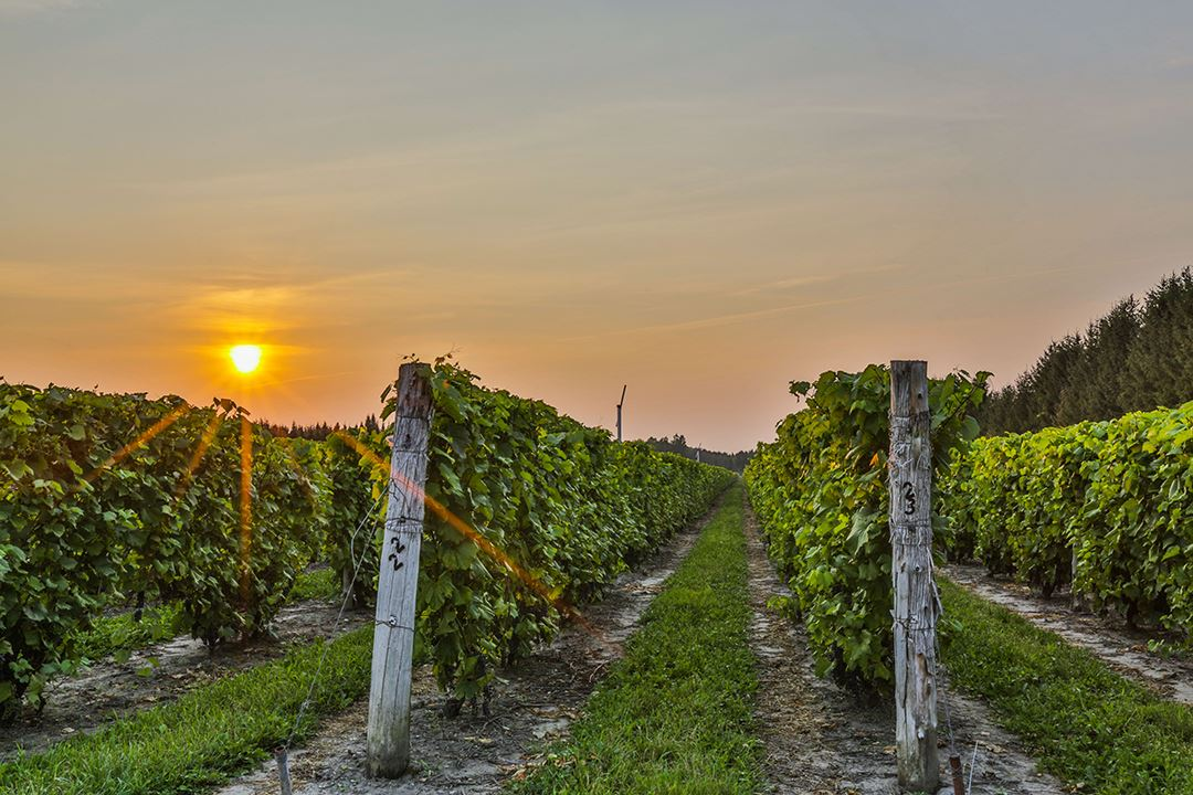 Go cycling on the Chemin du Roy and visit vineyards