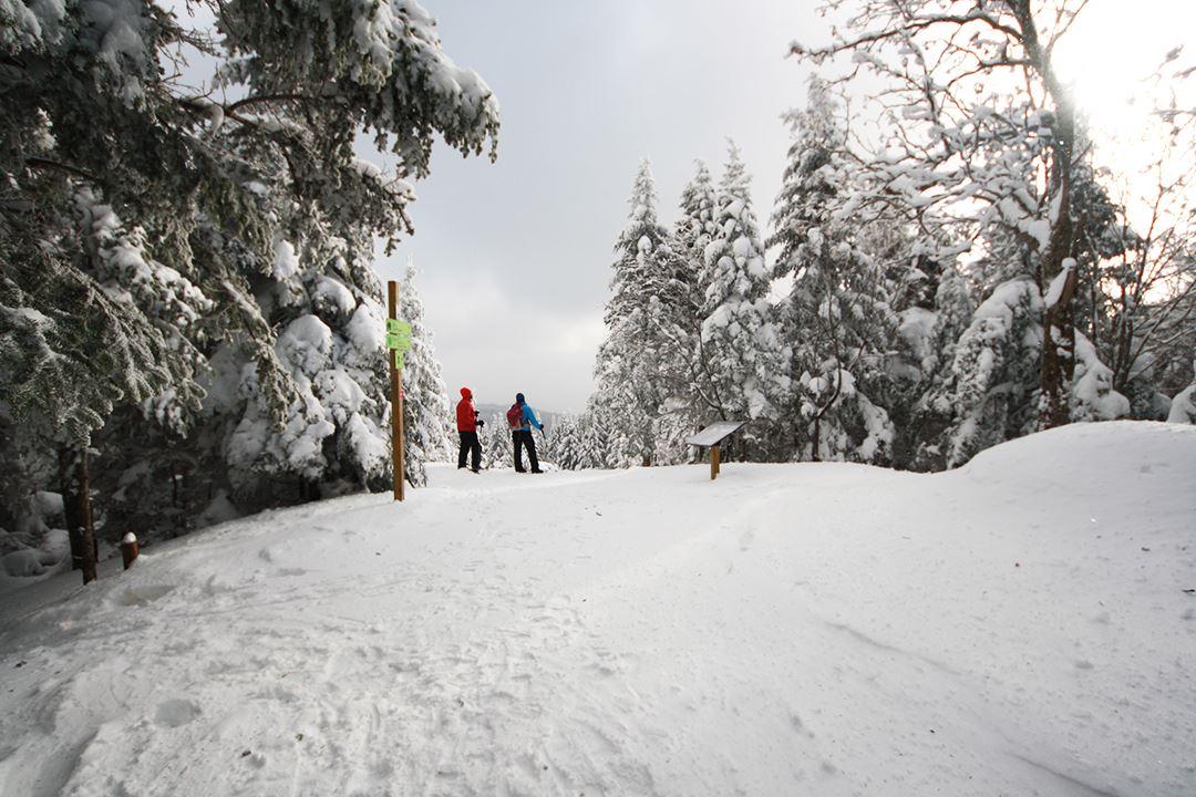 Snowshoeing on Montagne Noire